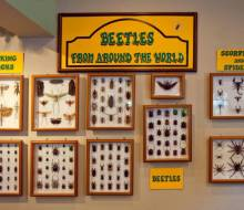 Beetles from Around the World