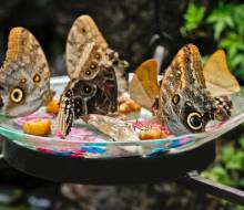 Lunchtime and treats for hungry butterflies